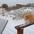 トロイ(トロイア)遺跡 ノラ猫歴史を語る