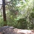 自然林の登山道