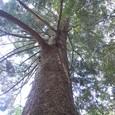 巨木が残る筑波の森