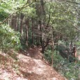落ち葉の絨毯の道