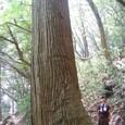巨樹を見上げる岩ちゃん