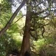 岩に立つ木