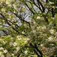 真っ白な花が咲いていた