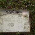 筑波山のブナ林