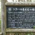 ツクバの名前の植物