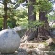 スイカと双子の大杉