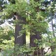双子の大杉
