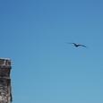 トゥルム遺跡上空を飛ぶコグンカンドリ
