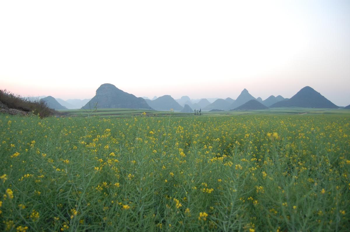 20102konmei_334