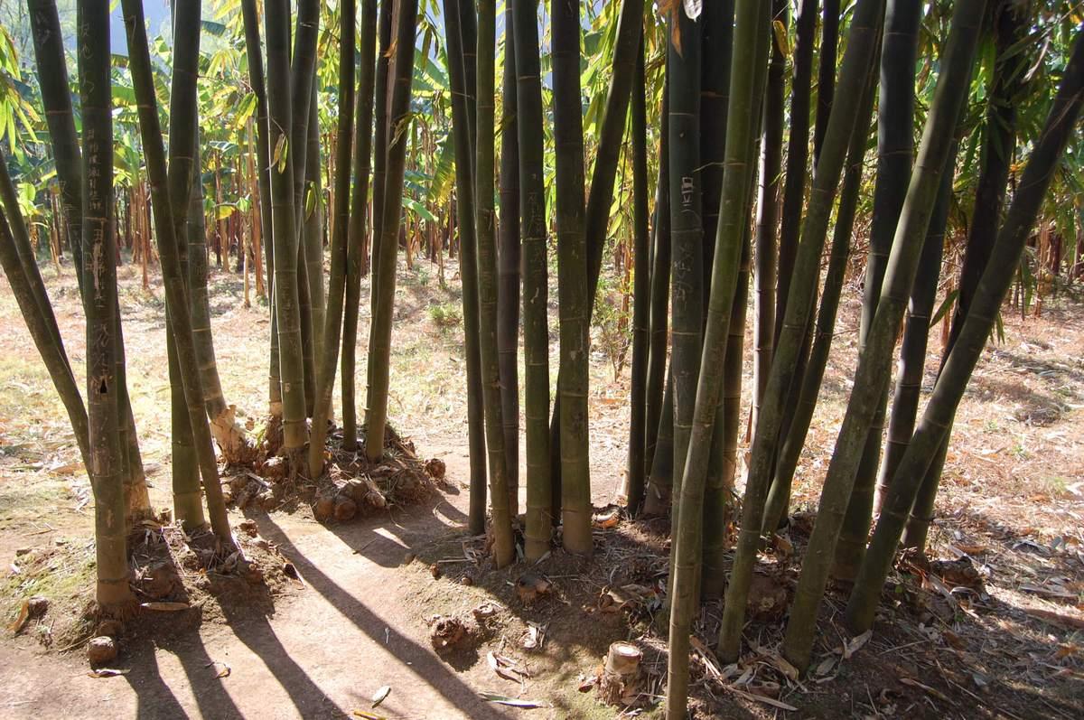 20102konmei_509
