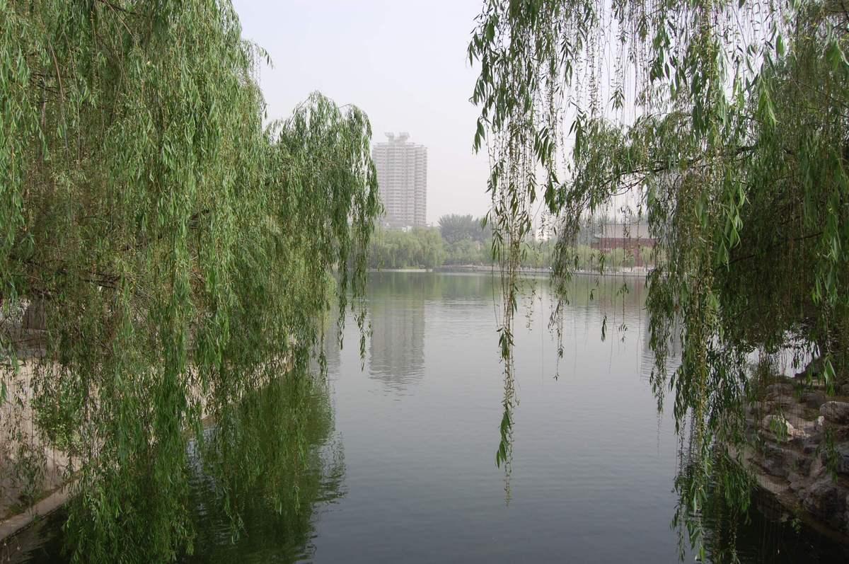 20105xianbeijin_509