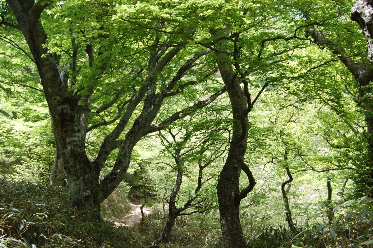 20105tsukunasan_097_2