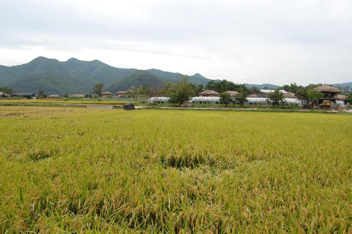 20109kudara_023