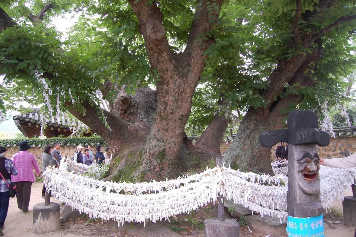 20109kudara_065