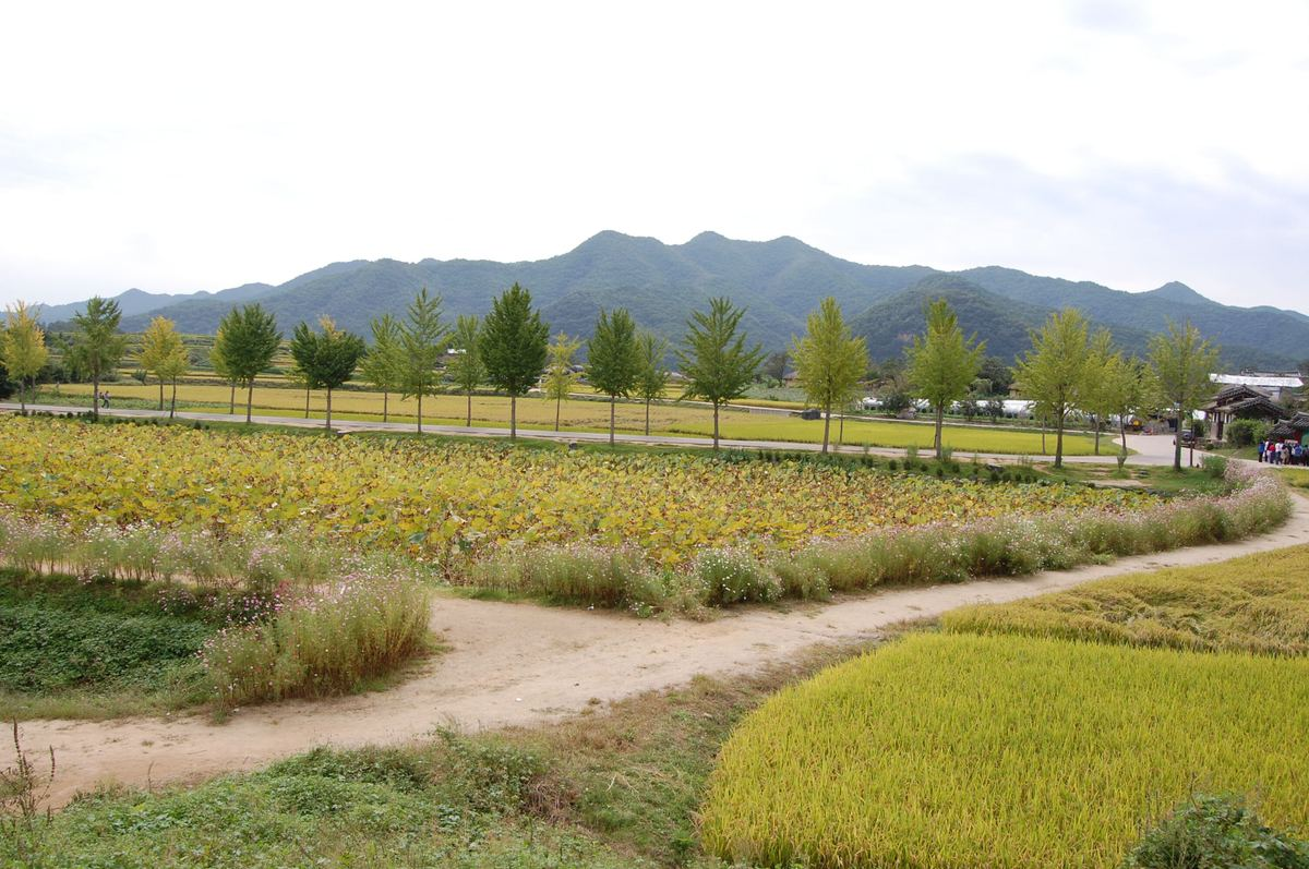 20109kudara_126