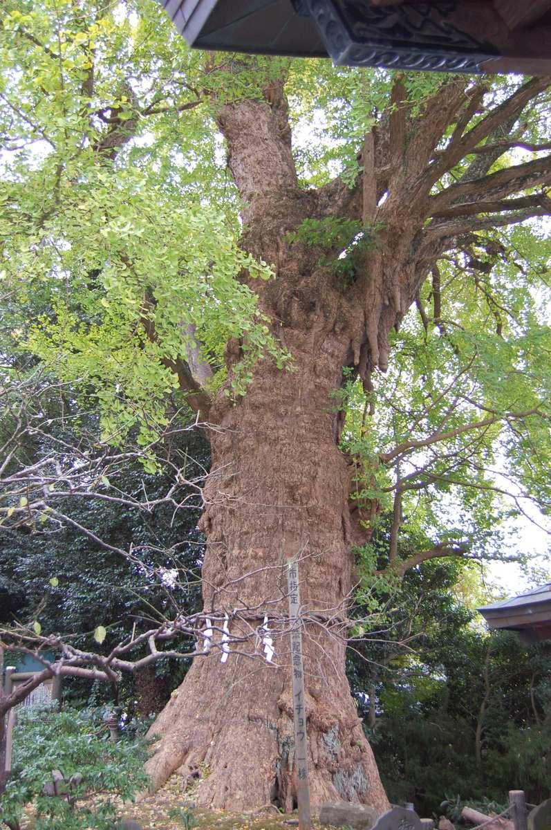 201011kamakura_075