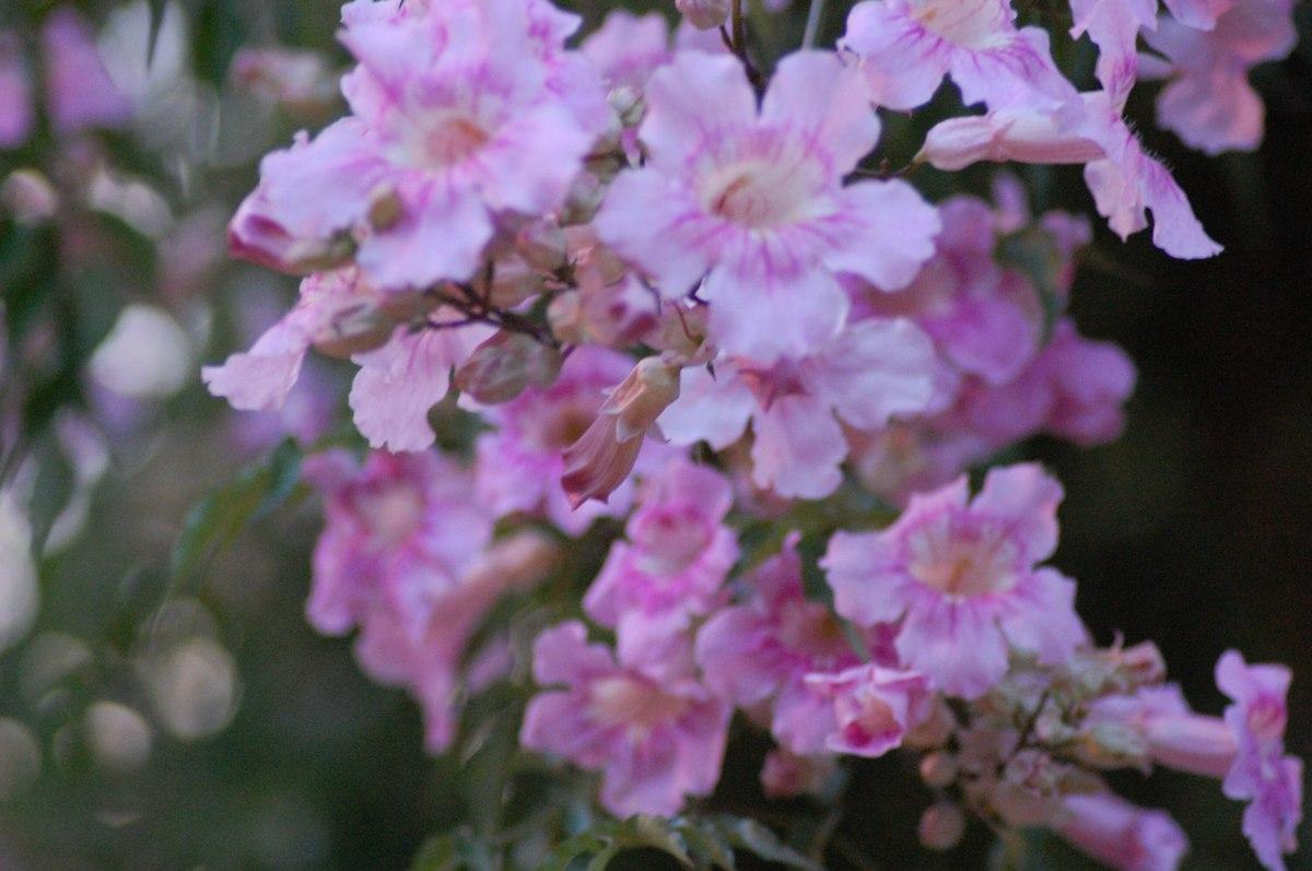 20114peru_636