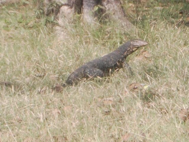 20115surilanka_665