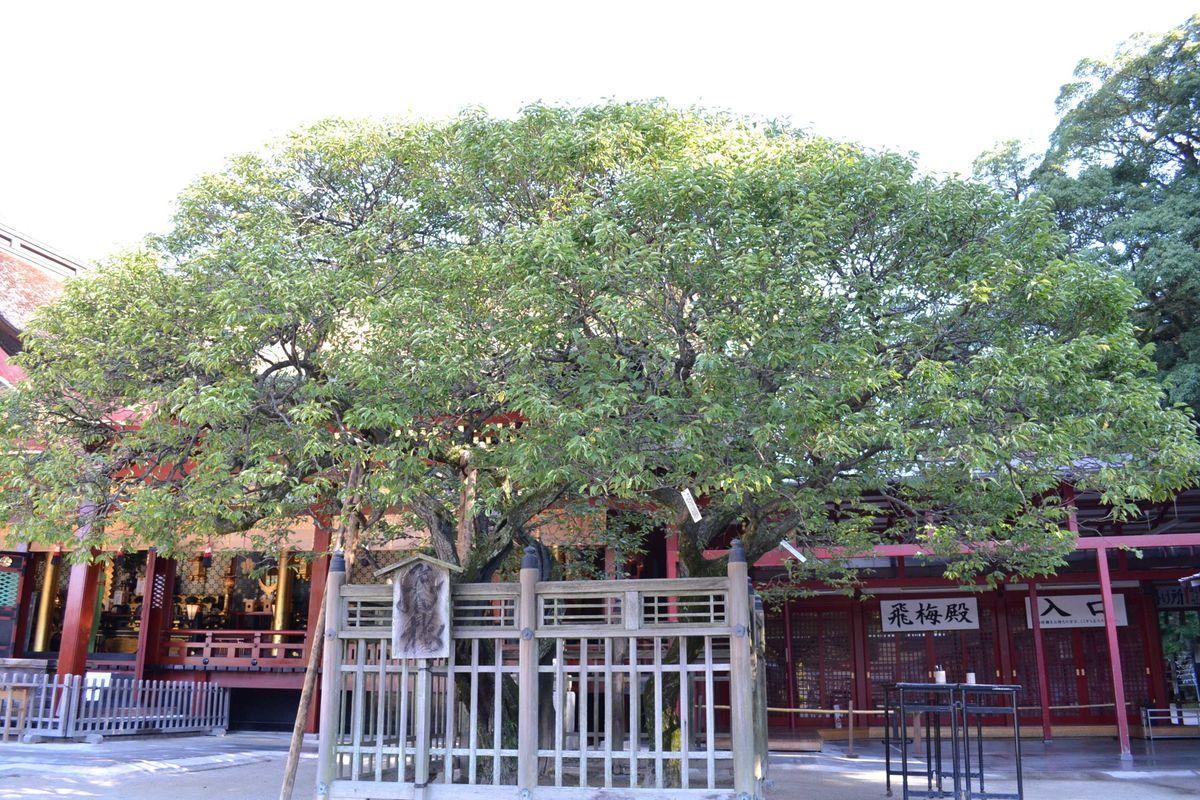 20119tsukushi_185