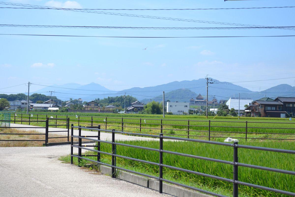 20119tsukushi_237