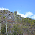 サボテンの山