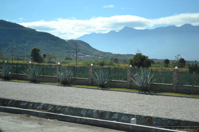 メスカルの工場が沢山街道にあります