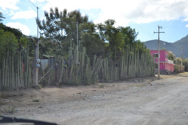 小さな村落 サボテンが垣根