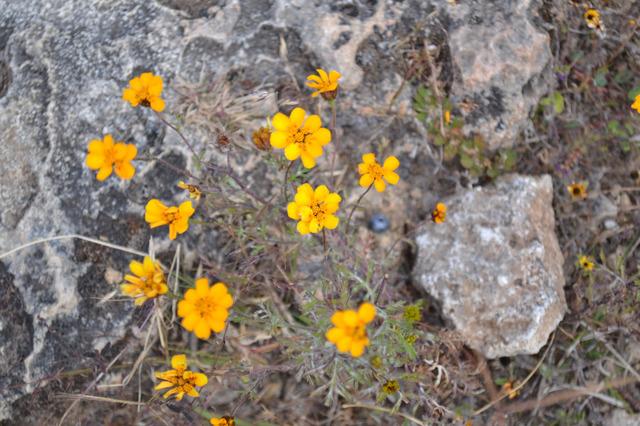 花弁の枚数がやたら多い花