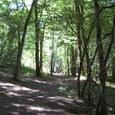 静かな木立の道