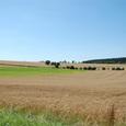 麦畑が広がる