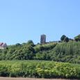 葡萄畑とマドレーヌ聖堂