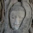 仏を菩提樹の木の精が守りました