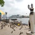 寺の前の船着き場 鳩が沢山