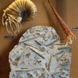 5億年前の頃か古生代 オウム貝
