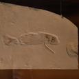 魚の先祖でしょうか