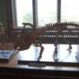 恐竜 プロトケラトプス