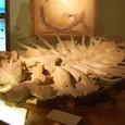 海亀みたいな恐竜