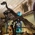 でかい恐竜です