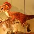 最新の研究では恐竜には羽毛が生えていたらしい