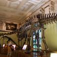 巨大な恐竜 迫力満点