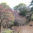 浅間神社を望む